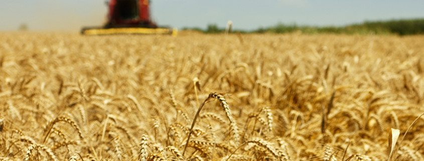 agspring-acquires-moreland-grain-and-seed