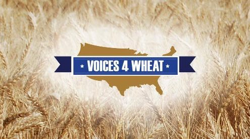 Voices 4 Wheat